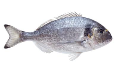 Laitance de poisson