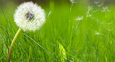 Le pic de pollen est annoncé : les bons gestes à adopter