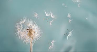 Les hypersensibilités, une intolérance du système immunitaire