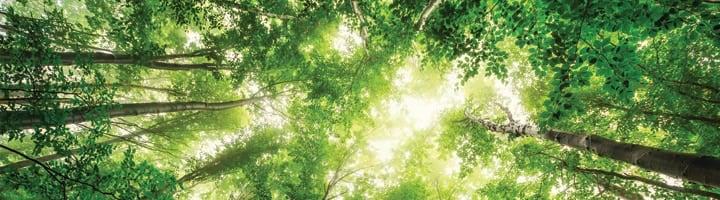 Forêt - arbres